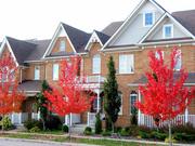Встречи,  съём жилья и оформление всех документов в Торонто,  Оттаве,  Ва