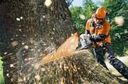 Профессионально и быстро уберем деревья