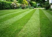 Выполним профессиональный покос травы